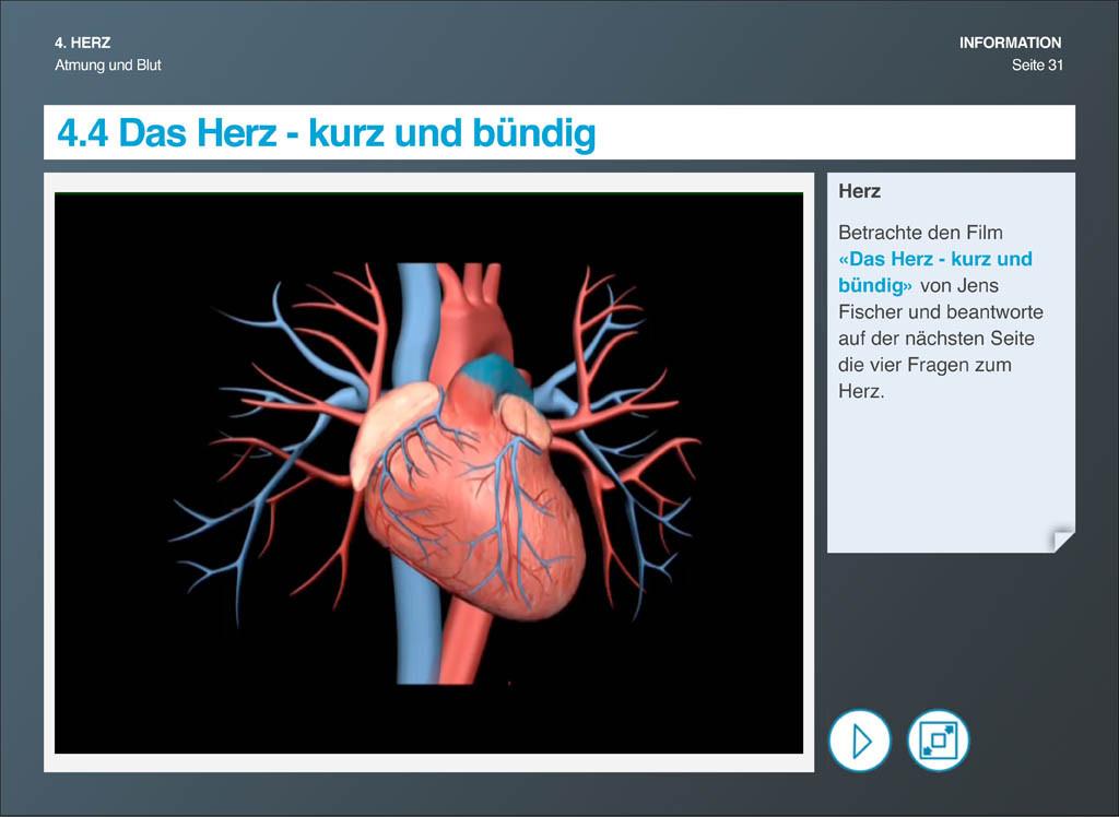 Atmung und Blut eBook: Das Herz - kurz und bündig